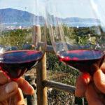 wijn en kookreis amalfikust